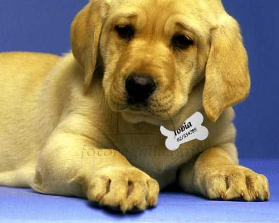 Medaglietta personalizzata cane e gatto
