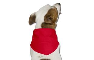 Bandana per cane personalizzata